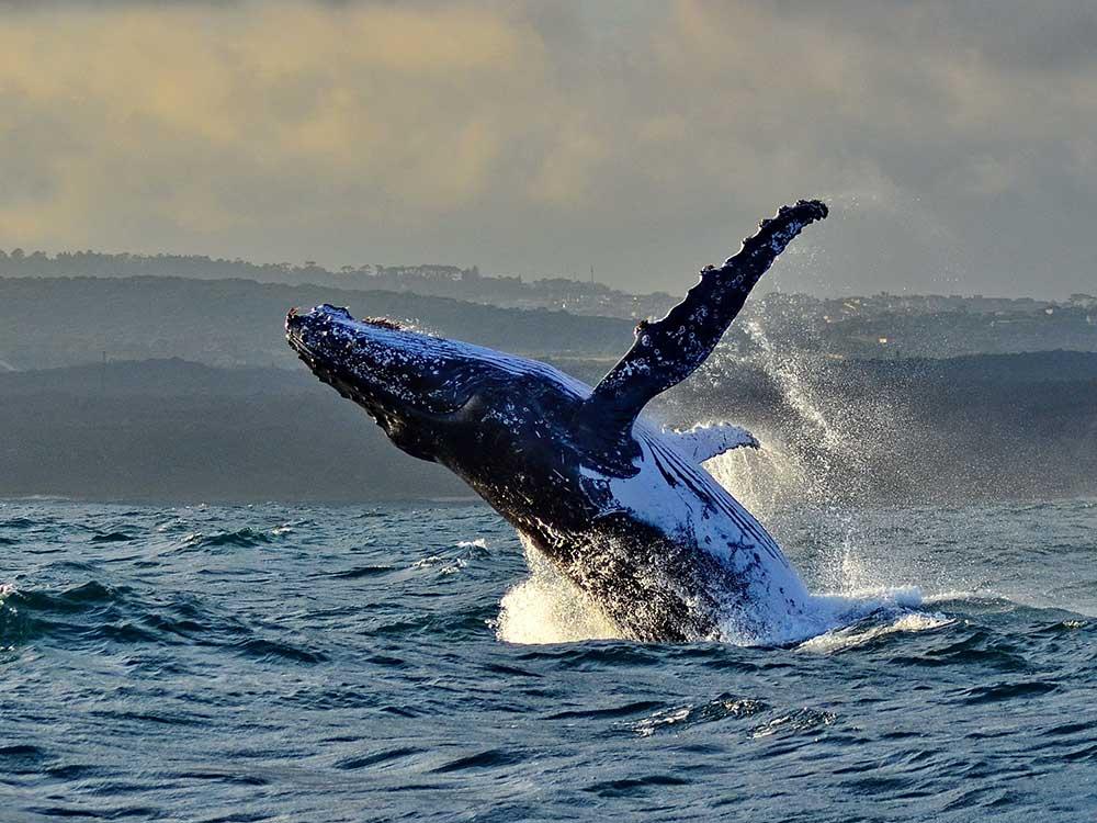 Whale watching in Port Elizabeth